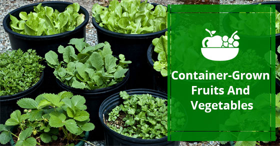 Container-Grown Vegetables