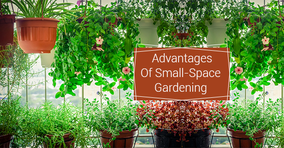 Advantages Of Small-Space Gardening