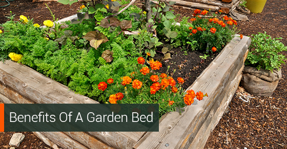 Benefits Of A Garden Bed