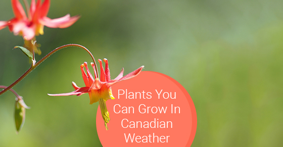 Plants You Can Grow In Canadian Weather