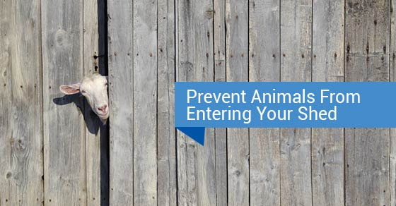 Prevent Animals From Entering Your Shed