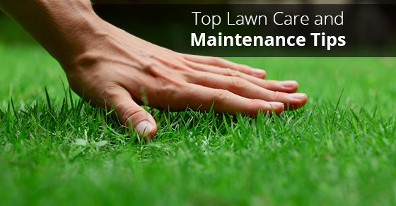 Top lawn care and maintenance tips