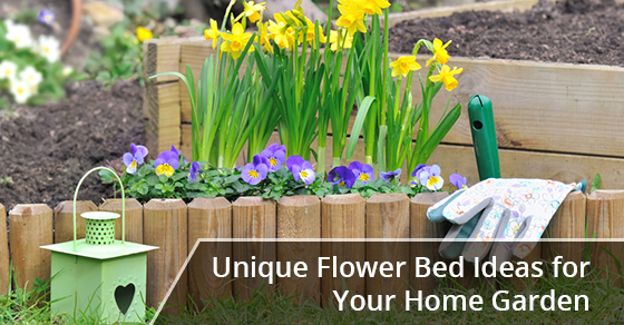 Daffodils and viola in flower bed in a  home garden